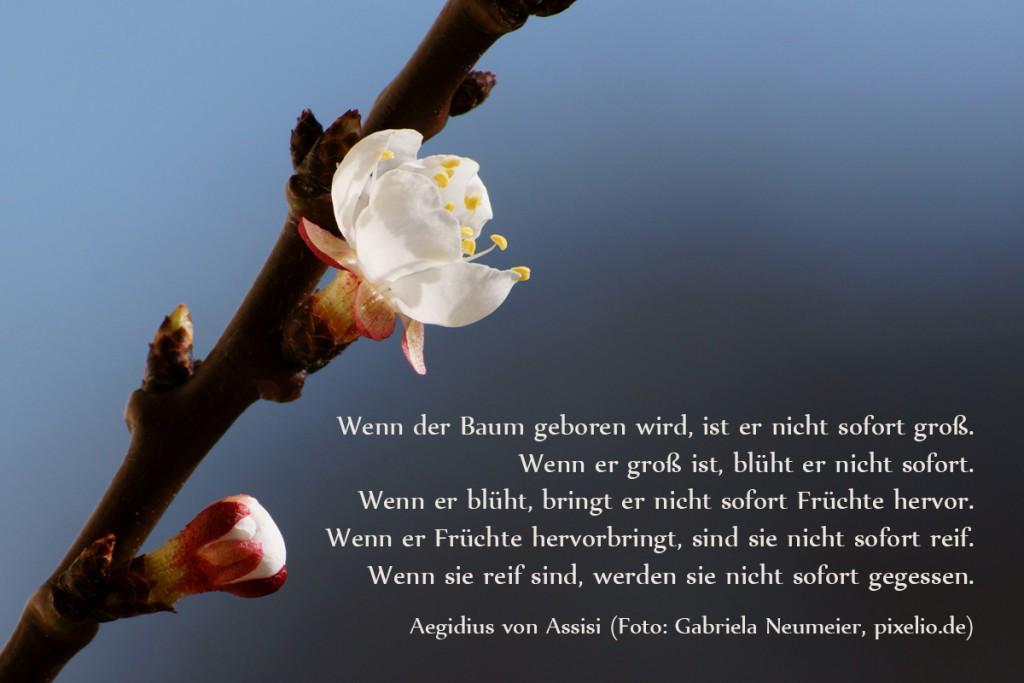 16014-Geduld-Baum