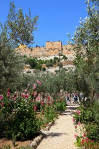 003-2017-05-28-0239-Israel-Jordanien-Reise