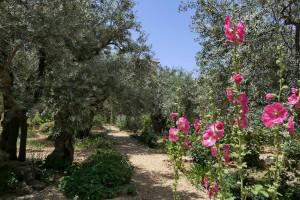 004-2019-06a-3040-Israelreise-Jerusalem-Oelberg