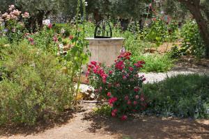 005-2019-06a-3054-Israelreise-Jerusalem-Oelberg
