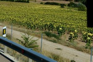 2019-09b-0015-Spanienreise-Mrh-Pastoren-kl